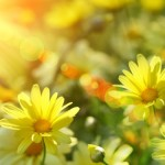 LLC Spring Flower